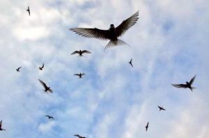 Ptáci nalétávají na naše hlavy